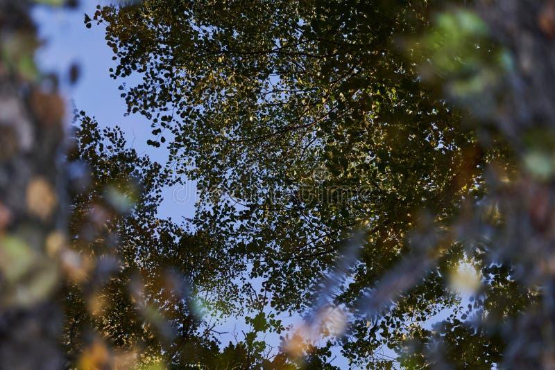 秋天森林在水坑的光滑的镜子表面被反射 免版税库存照片