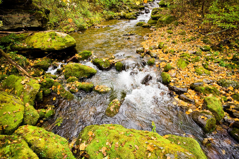 秋天森林小河Elomovsky用俄语Lazo储备 库存照片