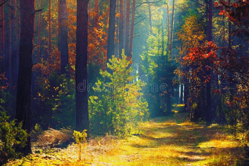 秋天森林晴朗的秋天自然 道路在五颜六色的森林里与 库存照片