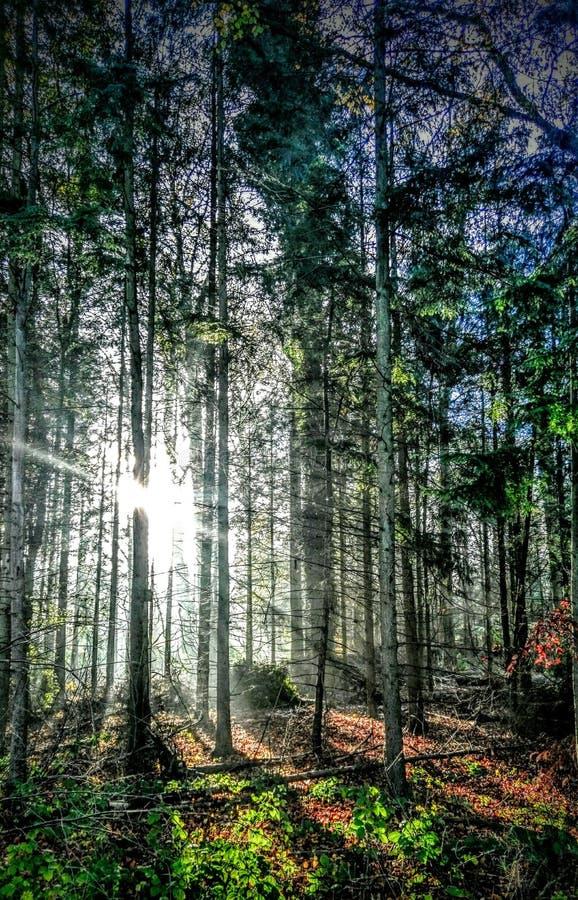 秋天森林树 免版税库存照片