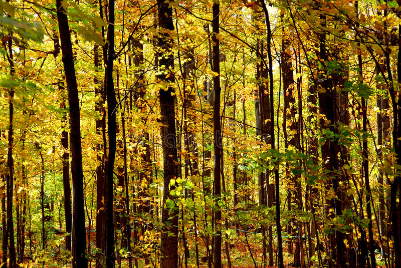 秋天森林横向 图库摄影