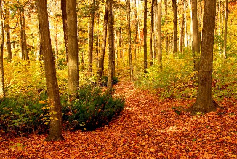 秋天森林横向 库存图片