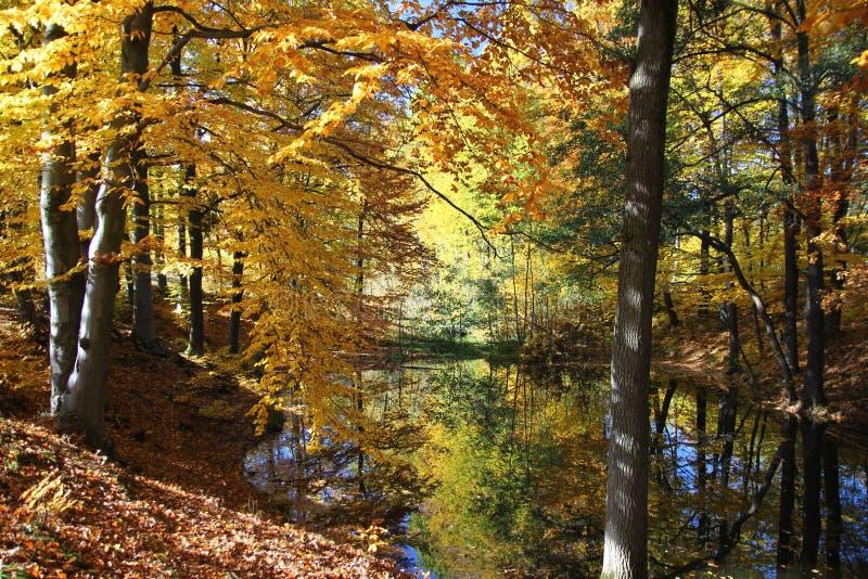 秋天森林池塘 免版税库存图片