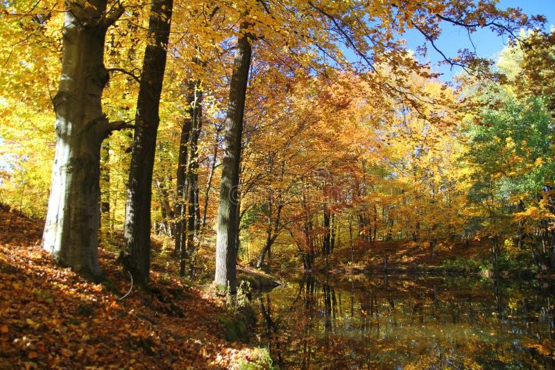 秋天森林池塘 免版税库存照片