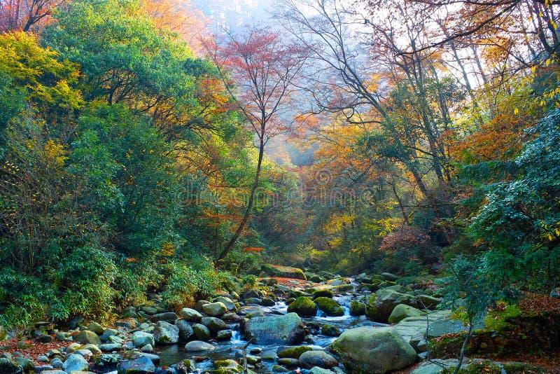 秋天森林流 免版税库存照片