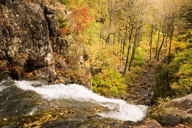 秋天森林瀑布小河Elomovsky用俄语Primorye 免版税图库摄影