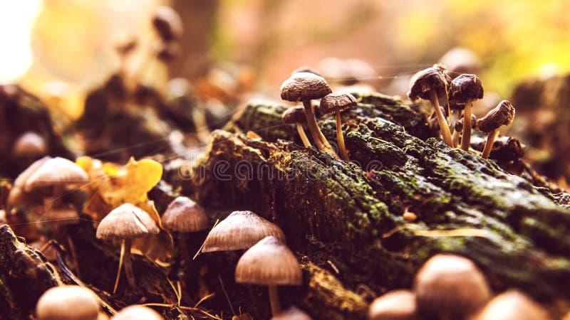 秋天森林狂放的蘑菇 免版税库存照片