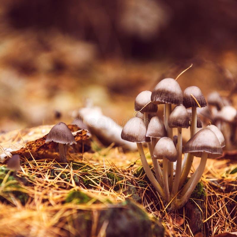 秋天森林狂放的蘑菇 库存图片