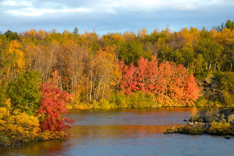 秋天森林的看法和湖的表面 与水和明亮的植被的美好的秋天风景 冰岛 Europ 免版税库存照片