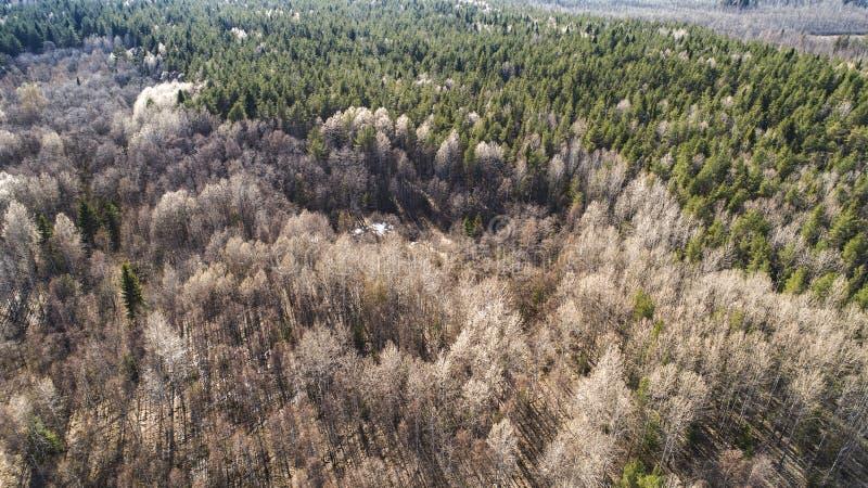 秋天森林空中寄生虫视图在春天 免版税库存照片