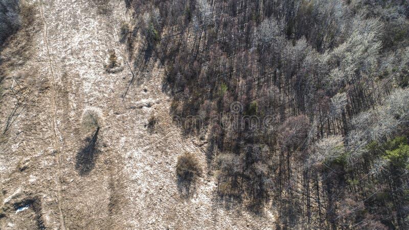 秋天森林空中寄生虫视图在春天 库存照片