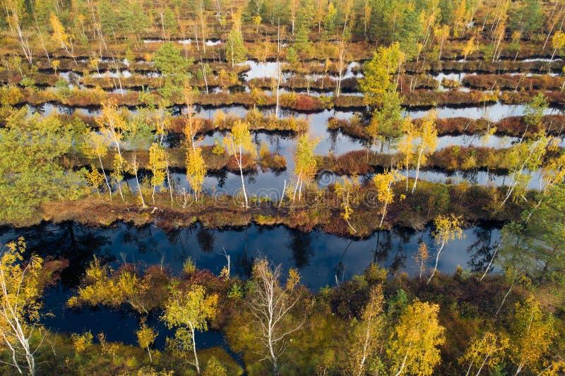 秋天森林空中寄生虫视图 免版税库存图片
