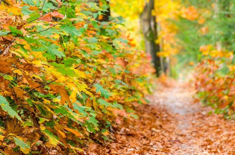 秋天森林自然背景 秋天,秋天红色森林道路离开往光 库存图片