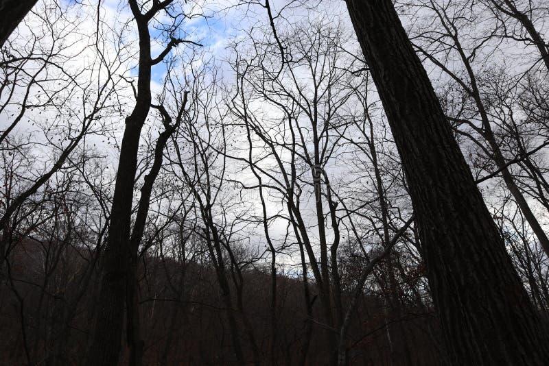 秋天森林自然 反对多云天空的树剪影 图库摄影