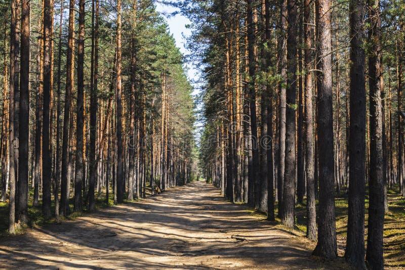 秋天森林自然 生动的早晨在有太阳的五颜六色的森林通过树分支发出光线 库存照片