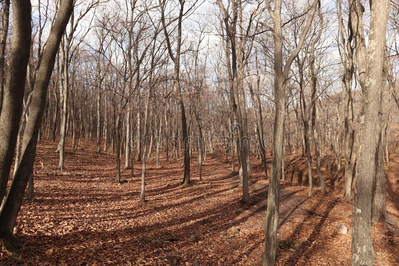 秋天森林自然 库存照片