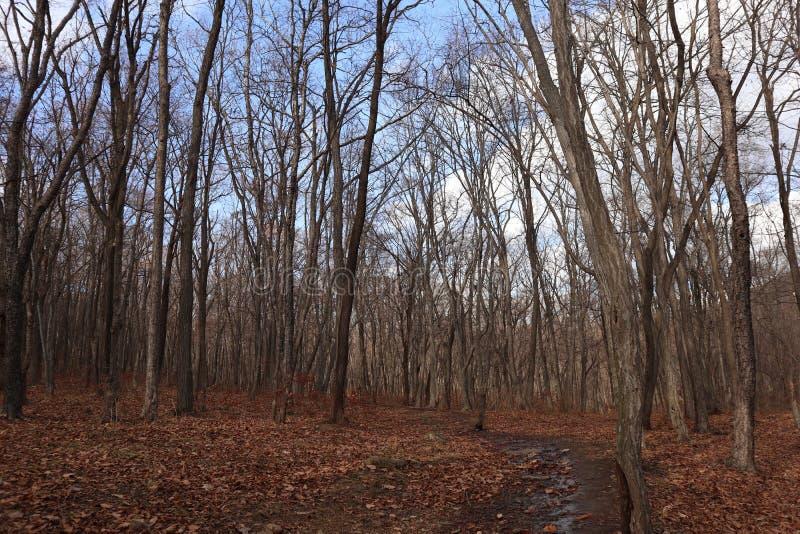 秋天森林自然 库存图片
