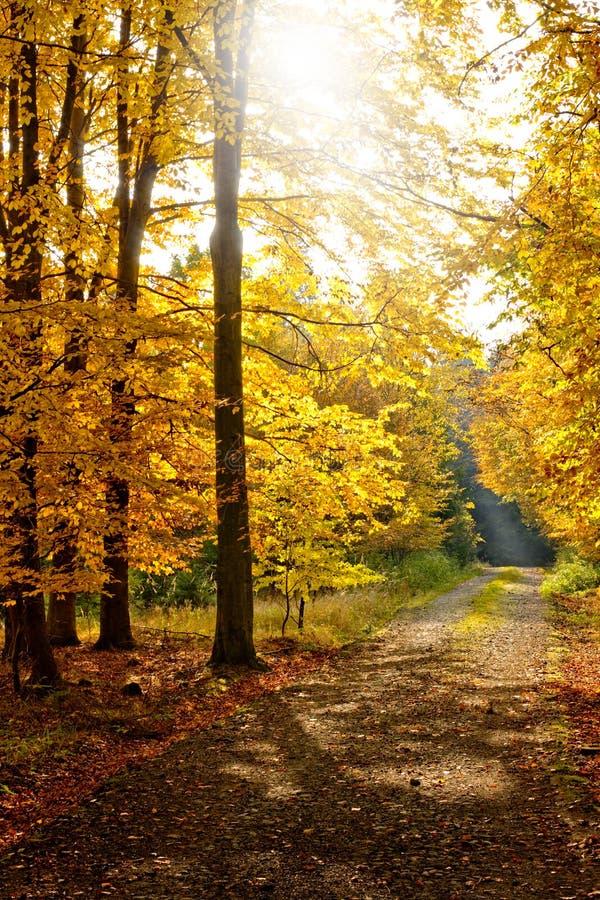 秋天森林路径 库存照片