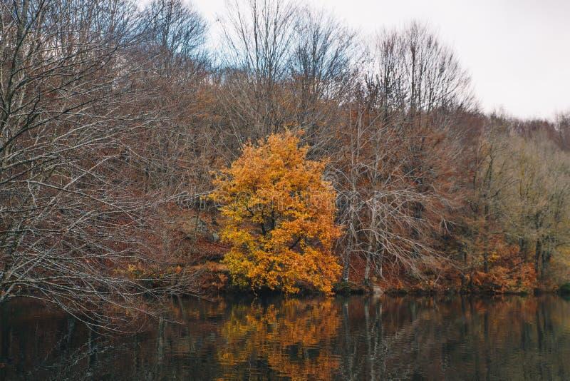 秋天森林风景的湖 库存照片