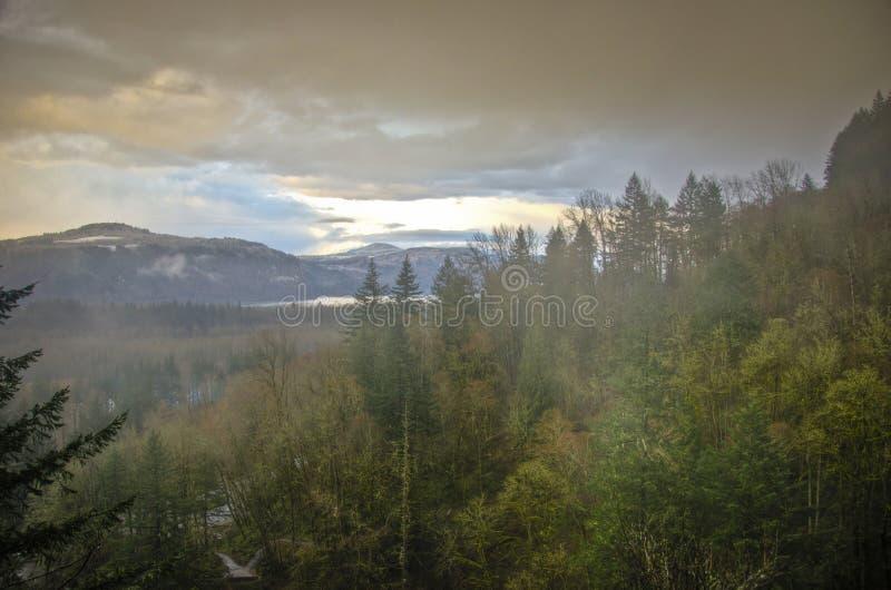 秋天森林,哥伦比亚河峡谷,俄勒冈 库存图片