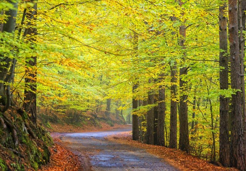秋天森林,清早 库存照片