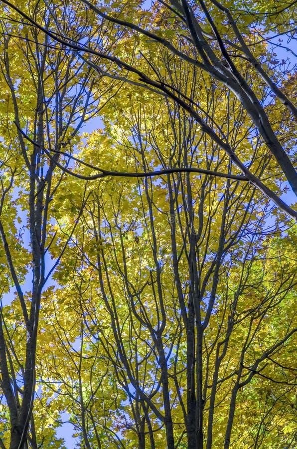秋天森林,照亮由阳光、黄色和绿色叶子, 免版税库存图片