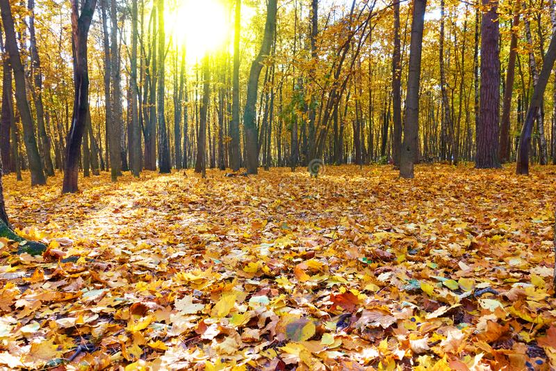 秋天森林-风景 库存照片