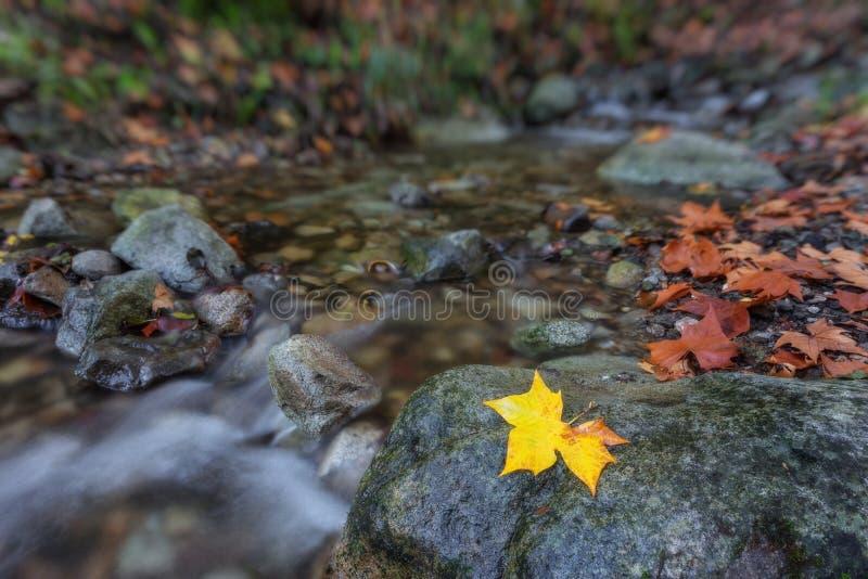 秋天概念小河在森林里 图库摄影