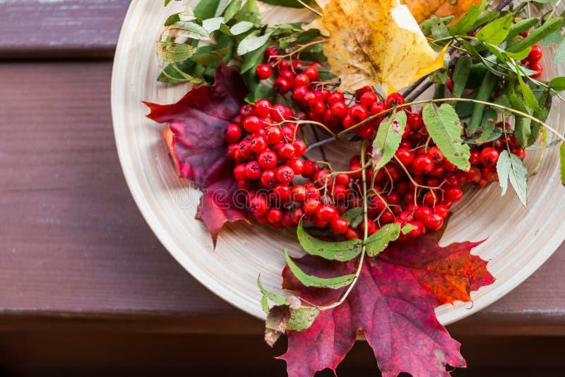 秋天概念用在木桌的花楸浆果 愉快的感恩装饰 土气木桌 秋天背景与 免版税库存照片