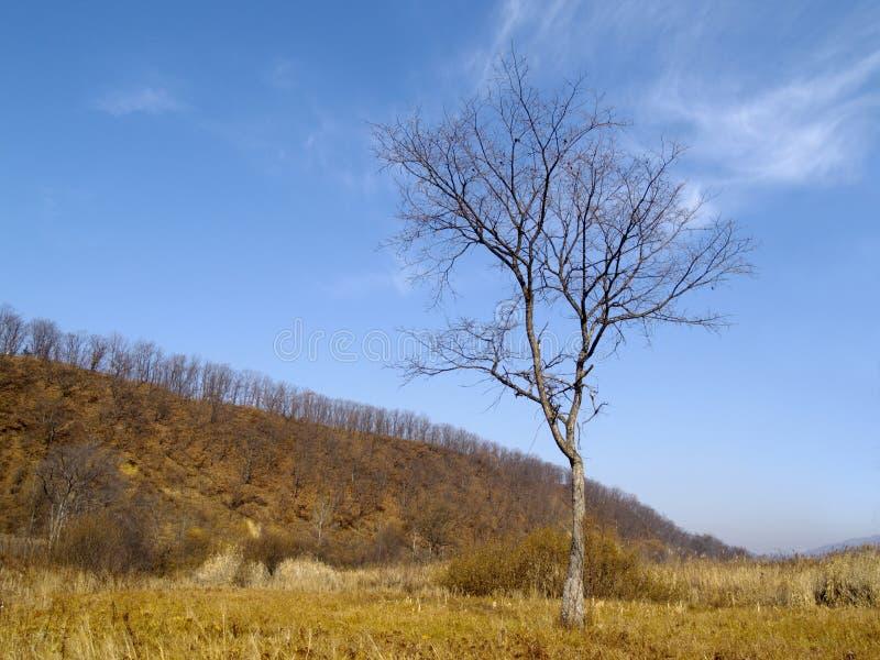 秋天榆木偏僻老 库存图片