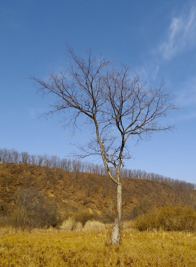 秋天榆木偏僻老 库存照片