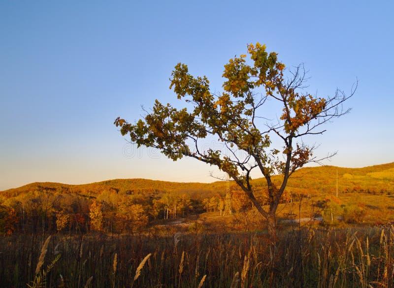 秋天横向偏僻的结构树 免版税库存照片