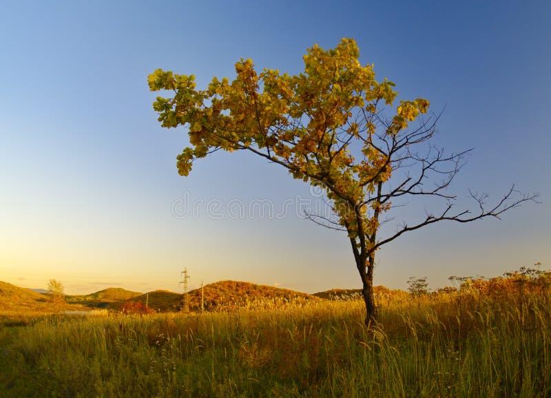 秋天横向偏僻的结构树 库存图片