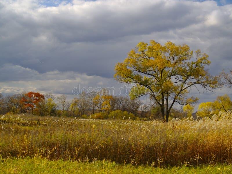 秋天横向偏僻的结构树 图库摄影