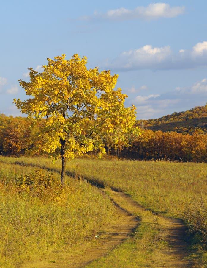 秋天横向偏僻的结构树 免版税库存图片
