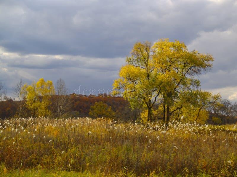秋天横向偏僻的结构树 库存照片