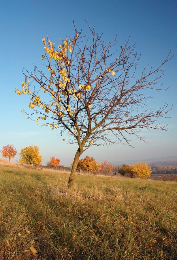 秋天横向结构树 库存照片