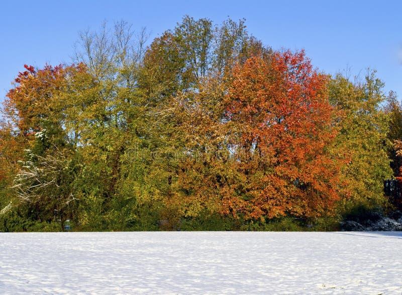 秋天横向雪 免版税库存图片