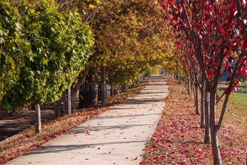 秋天横向 美丽的胡同在有五颜六色的树的一个公园 穆卡切沃,乌克兰 库存照片