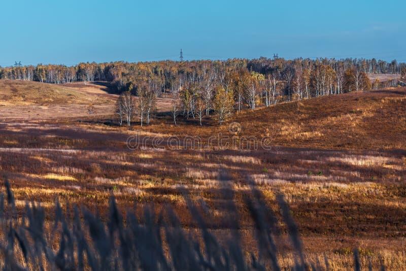 秋天横向 西西伯利亚,俄罗斯 免版税库存照片
