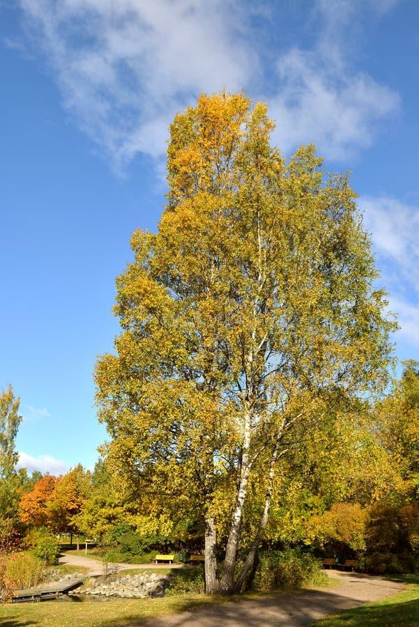 秋天横向 赫尔辛基 库存照片