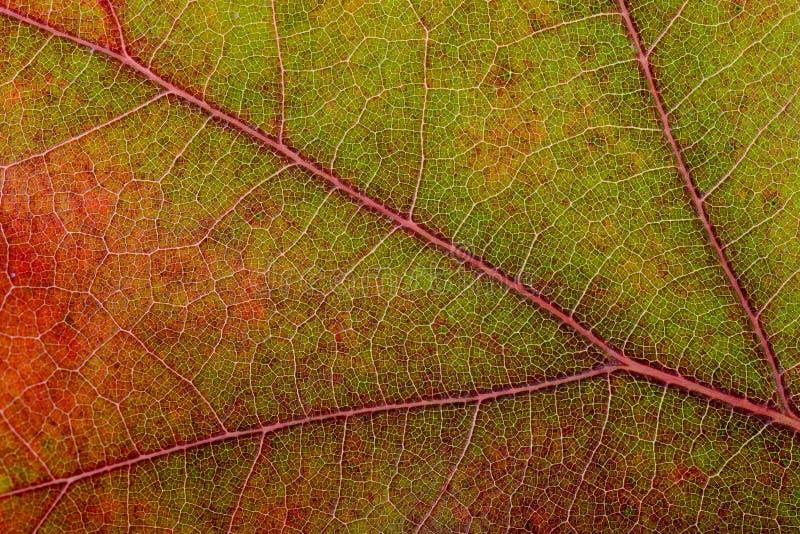 秋天橡木叶子宏指令 库存图片