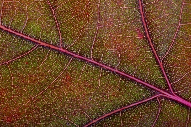 秋天橡木叶子宏指令 库存照片