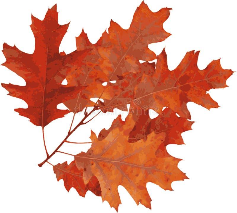 秋天橡木红色 皇族释放例证