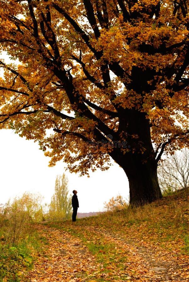 秋天橡木 图库摄影