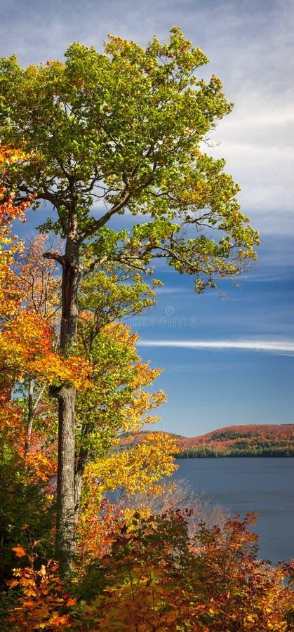 秋天橡树 库存照片