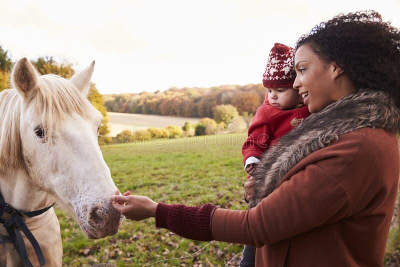 秋天步行的女孩与抚摸马的母亲 免版税库存照片