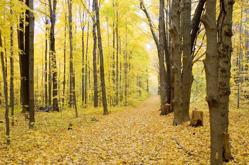 秋天水平的路径 免版税图库摄影