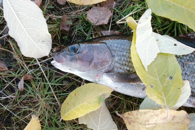 秋天浮子捕鱼浮动叶子水黄色 这样欢迎到渔夫大胆的秋天河鳟 库存图片