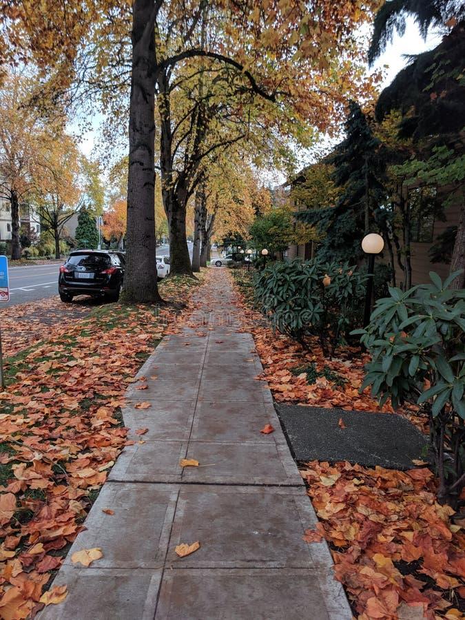 秋天漫步 库存图片